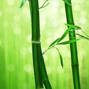 bamboo-1045972_1920